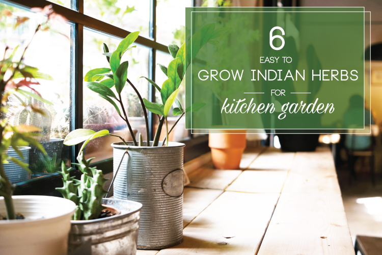 6 Easy To Grow Indian Herbs For Your Kitchen Garden