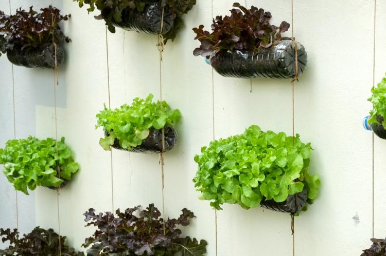 5 DIY Vertical Garden Ideas For Your Home
